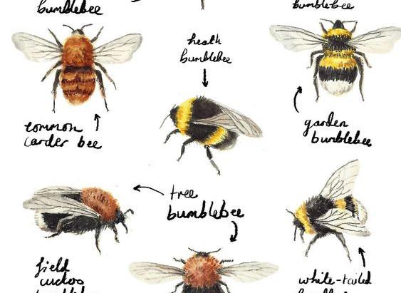 Bee Pollen Magic