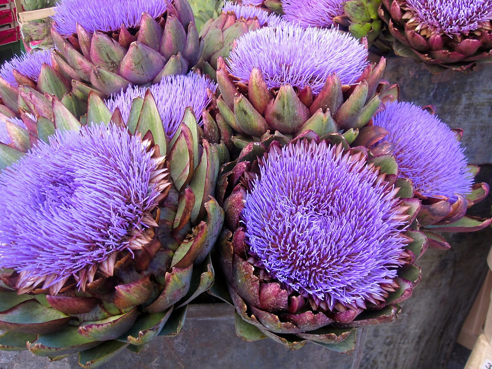 An artichoke is an immature flower bud of a thistle plant.