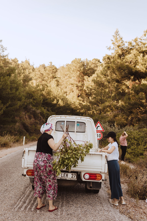 Gathering Olive Branches