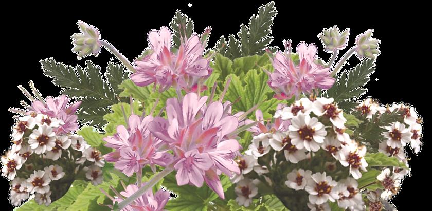 PI Love bouquet.png