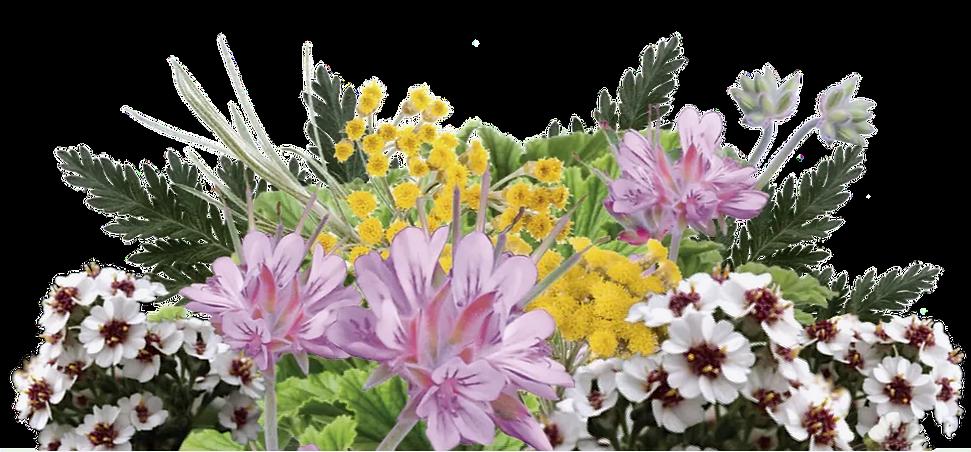 Tranquil Bouquet.png