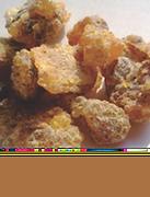 Namibian Myrrh tree gum resin
