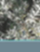 Karoo Pteronia Incana