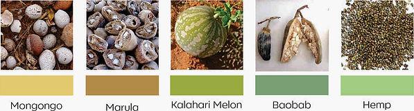 Carrier Oils, mongongo, Marual, Kalahari melon, Baobab, hemp