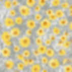 Lucy Cooper design card of yellow daisies
