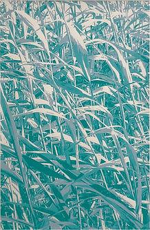 Lucy Cooper screenprint Docklands reeds