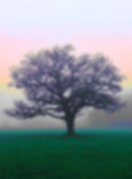 Winter tree on Wimbledon Common