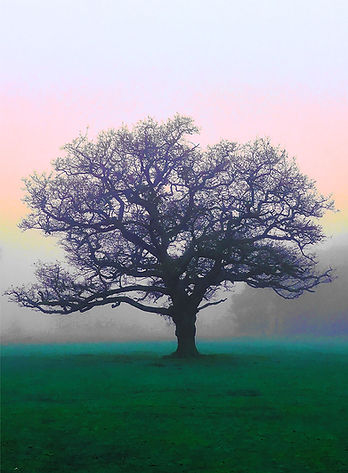 Tree Wimbledon_2-Recovered.jpg