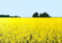 barleypig field card.jpg