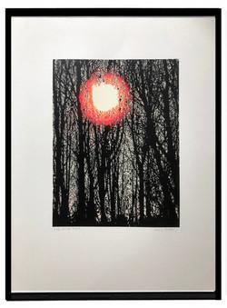 Winter trees framed