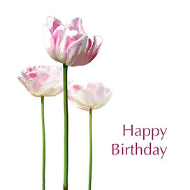 Tulip 6x6 card happy birthday.jpg