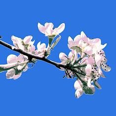 blossom card
