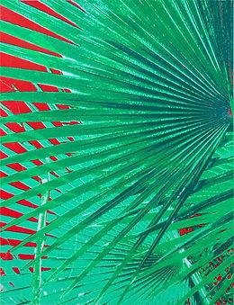 Lucy Cooper_Tropical heat.jpg