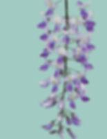 wisteria 2 card colours.jpg