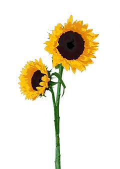 sunflower card.jpg