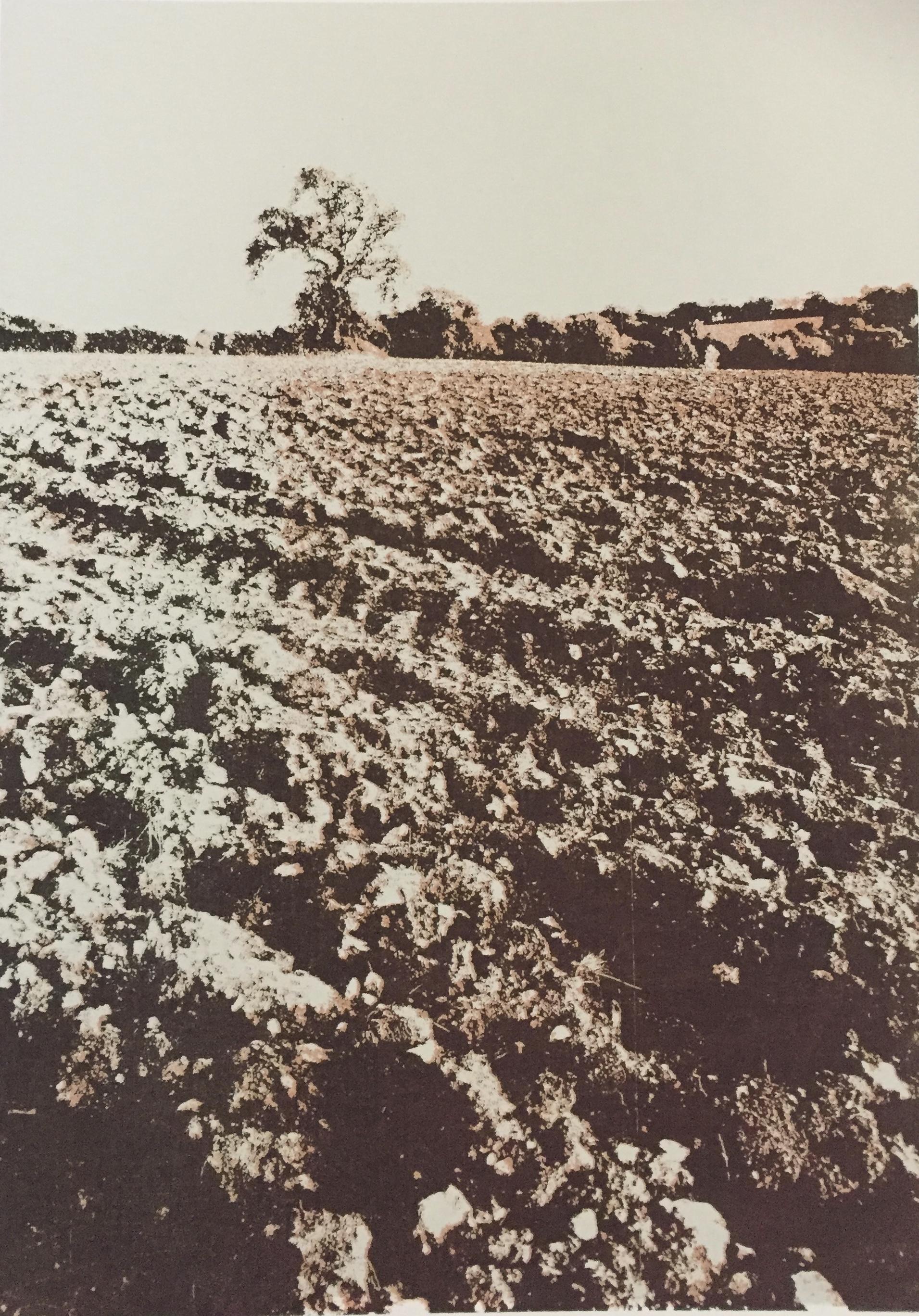 Oxfordshire field
