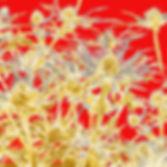 eryngium card 5.jpg