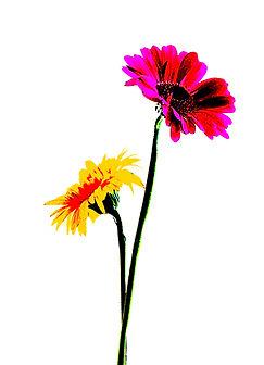 two daisies card.jpg