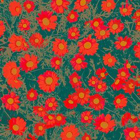 daisies christmas coloursiv.jpg