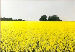 barleypig field unframed