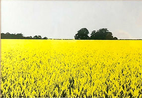 Wheatfield in Oxfordshire screenprint