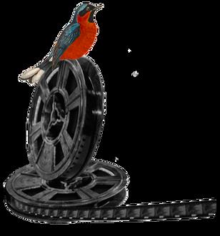 BirdonFilm_edited.png