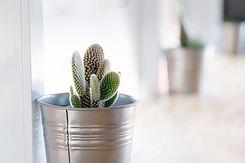 Plant fenêtre