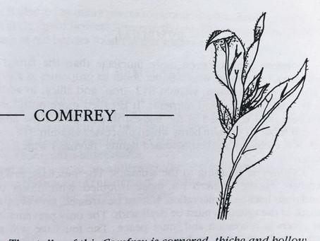 Medicinal Monday: Comfrey