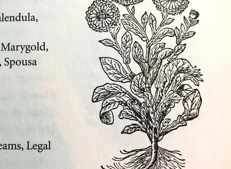 Medicinal Monday: Calendula