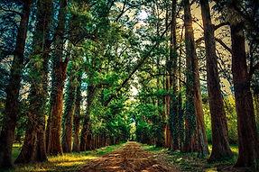 forest-2124041_960_720.jpg