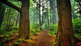 Backgrounds-Forest-Desktop.jpg