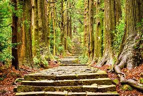 Forest_in_Japan.jpg