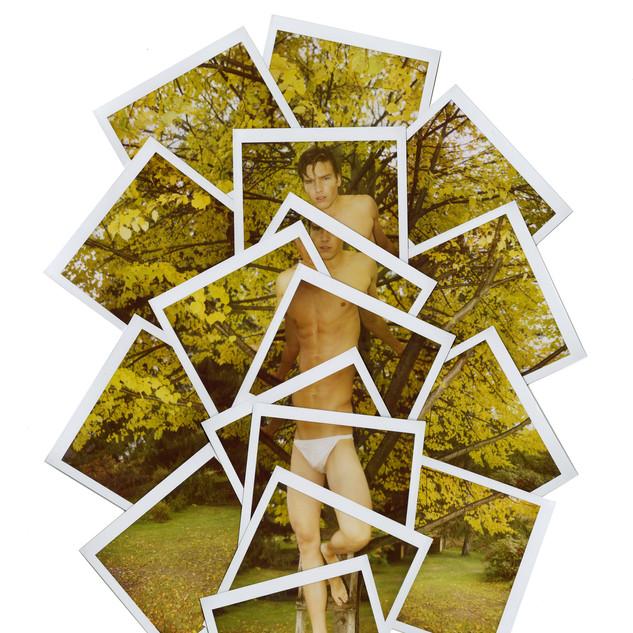 _Yellow Leaves_, 2010.jpg