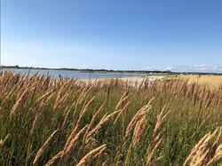 Strandbild Träslövsläge