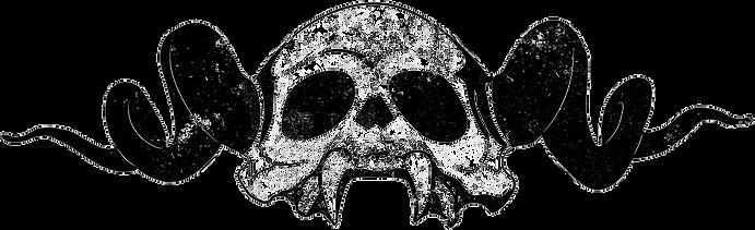 Skull Trans copy.png