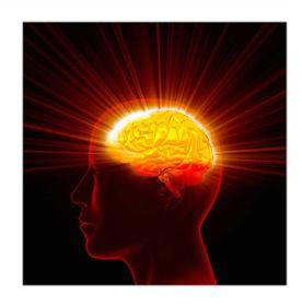 or-brain_illustration_with_border.jpg