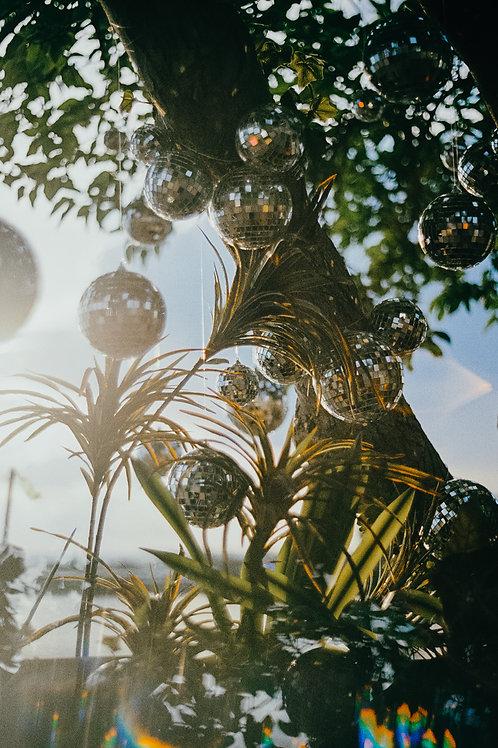 Disco Tree Framed Print by Haley Busch - 8 x 12