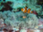 体験ダイビング:砂辺イメージ