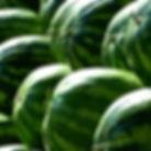 inside-farm watermelons.jpg