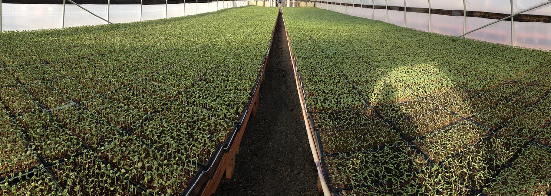 header-greenhouse1