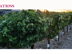 Nevada Agriculture is Investing in the Future of Nevada Wine
