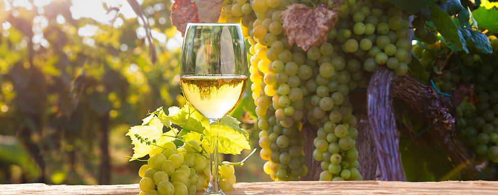 wineglass-vineyard.jpg