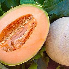 farm-cantaloupe.jpg