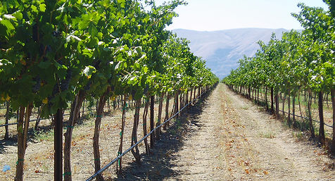 vineyard-gorge8.jpg