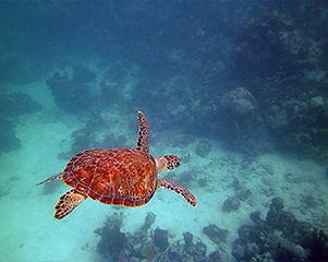 5-sea-green-sea-turtle.jpg