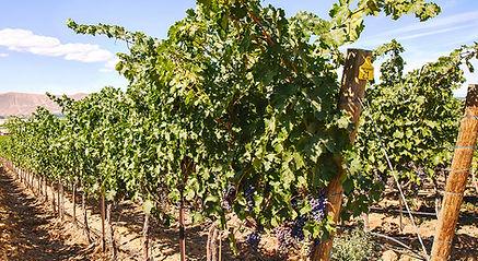 vineyard-about1.jpg