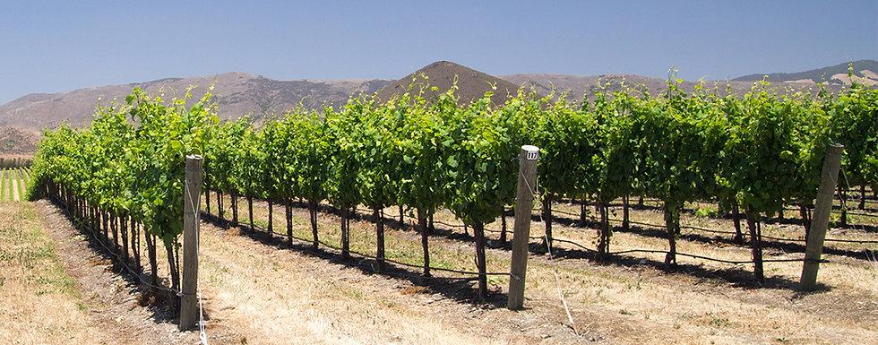vineyeardrows-hills.jpg
