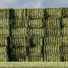 farm-hay-green.jpg