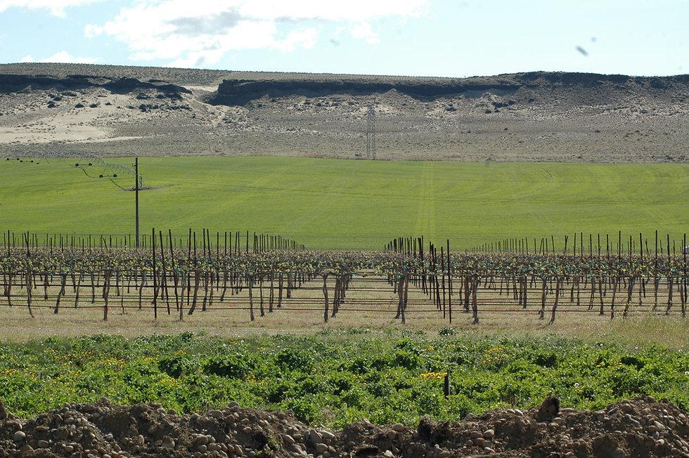 Ginkgo Forest Winery Vineyard