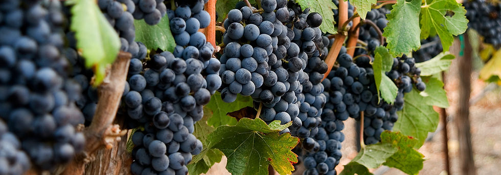 grape clusters.jpg